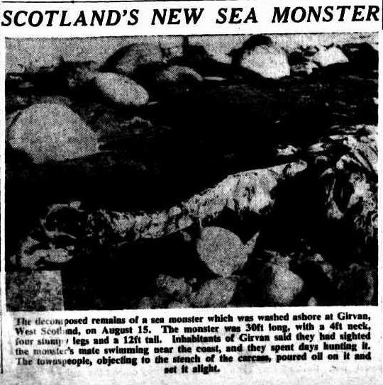 """Φωτογραφία των υπολειμμάτων του τέρατος, όπως δημοσιεύθηκε στην αυστραλιανή ημερήσια εφημερίδα """"The Sydney Morning Herald"""", στις 09/09/1953..."""