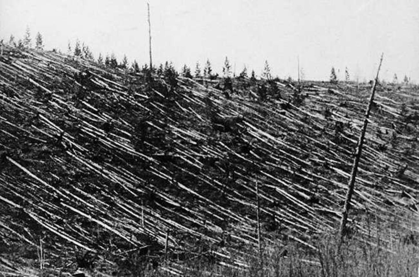 Δέντρα κτυπημένα από το ωστικό κύμα της εκρήξεως της Τουγκούσκα. Φωτογραφία από την αποστολή του Κούλικ (1927)