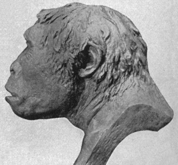 Ανακατασκευή του κρανίου του Ανθρώπου της Ιάβας (Homo Erectus Erectus), 1922