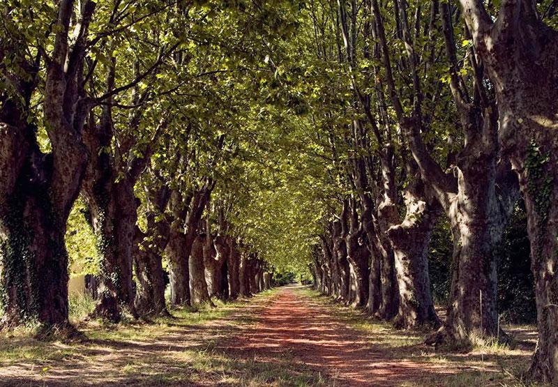 Μονοπάτι στα δάση της Προβηγκίας