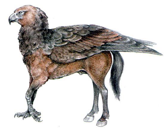 Ιππόγριφφος