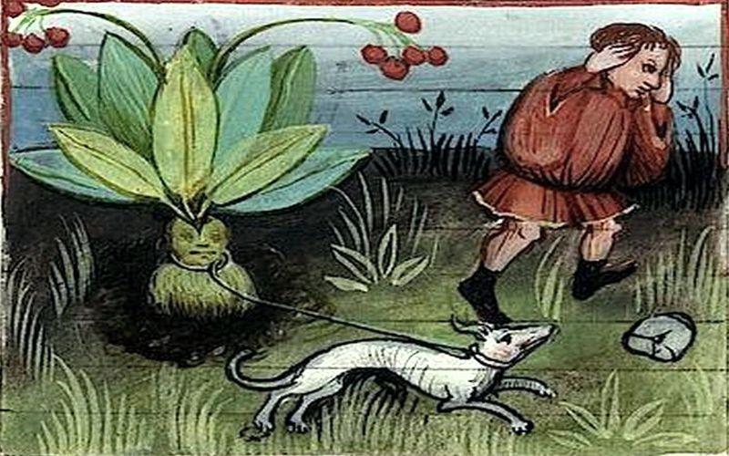 Μυστηριώδη και μαγικά φυτά...