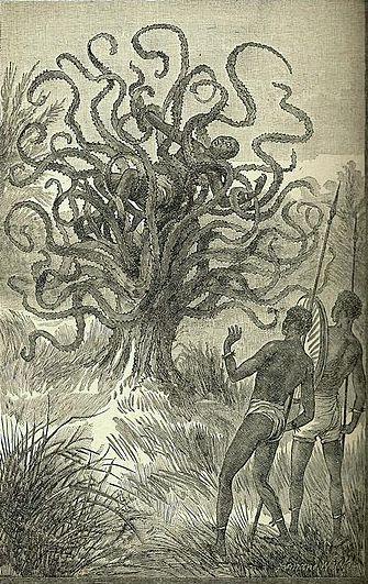 Το σαρκοφάγο δέντρο της Νοτίου Αμερικής