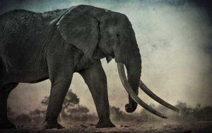 Εμφάνιση Γιγαντιαίων ελεφάντων, το 1939...