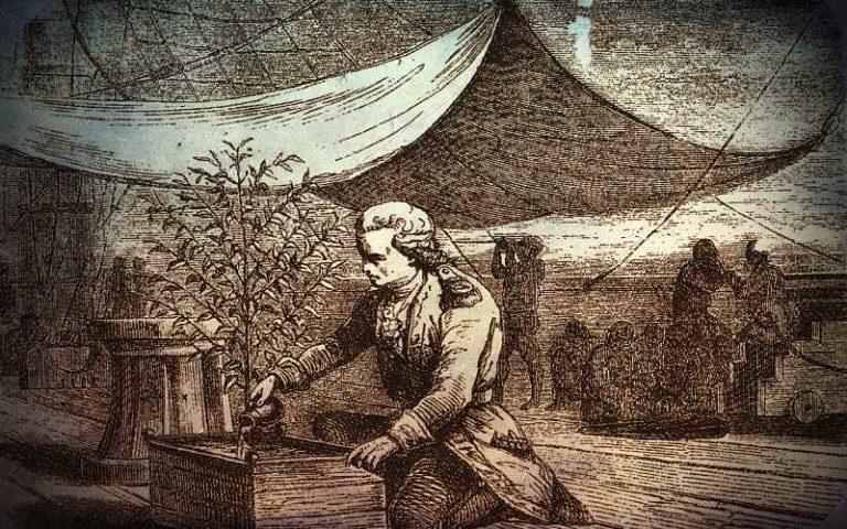 """Η ιστορία του μοναδικού φυτού καφέ, που """"κατέκτησε"""" τον κόσμο..."""
