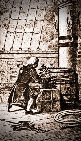 Ο Πλοίαρχος Gabriel de Clieu, ποτίζοντας το πολύτιμο φυτό του καφέ, πάνω στο πλοίο που τον μετέφερε στη Μαρτινίκα