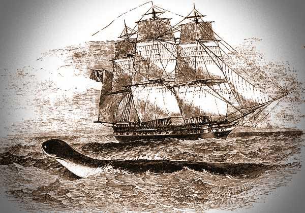 """Γκραβούρα εποχής, στην οποία απεικονίζεται το θαλάσσιο ερπετό που θεάθηκε από το πλήρωμα του αγγλικού πολεμικού πλοίου """"Daedalus"""""""
