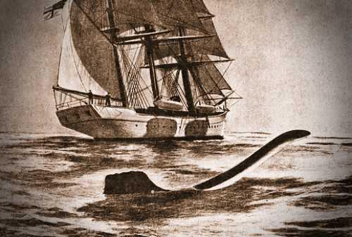 """Το θαλάσσιο ερπετό που θεάθηκε από τους επιστήμονες της ωκεανογραφικής αποστολής του """"Valhalla"""""""