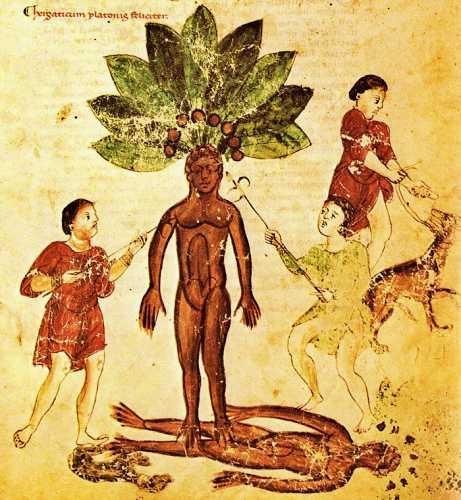 Σύμφωνα με τη γερμανική παράδοση, ο μανδραγόρας φύτρωνε μονάχα στον τόπο εκτέλεσης των καταδίκων
