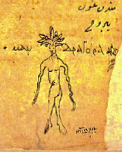 Απεικόνιση του μανδραγόρα από τον Διοσκουρίδη τον Πεδάνιο
