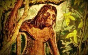 Ο μυστηριώδης ανθρωποπίθηκος της Σουμάτρα...