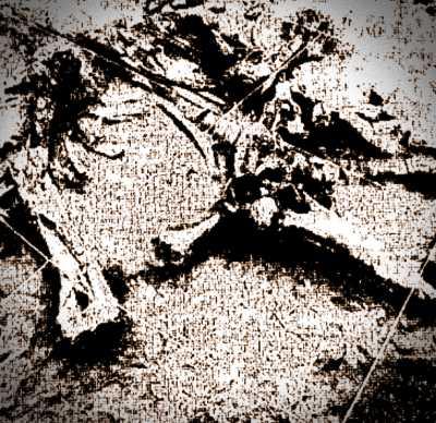 Γενική κάτοψη της θέσης του προϊστορικού ελέφαντα, που βρέθηκε κατά τις ανασκαφές στους αμμόλοφους του Περδίκκα της Κοζάνης