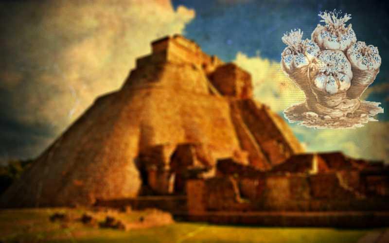 """Πεγιότ - Το μυστηριώδες φυτό, που οι Αζτέκοι αποκαλούσαν """"Θεϊκό Αγγελιαφόρο""""..."""