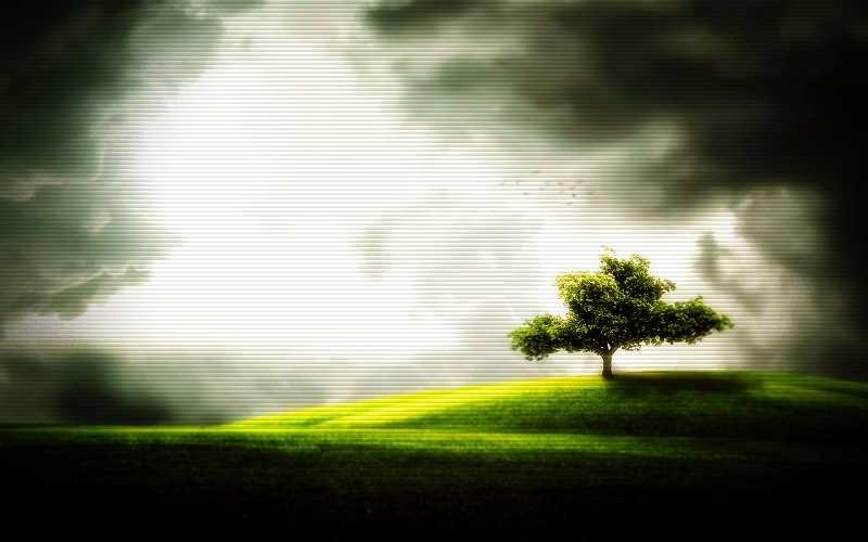 Το μυστηριώδες φωτοβόλο δέντρο της Γαλλίας...